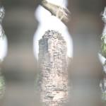 Phimai - Prang im Fenster