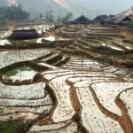 Sapa - Dorf umgeben von Reisfeldern