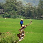 Sapa - Reisfeldbewässerungsanlage