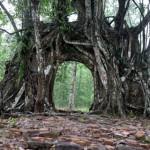 Hue - Das Minh Mang Grab - Wurzeltor