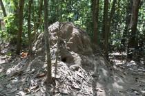Belüftung via Termitenbau