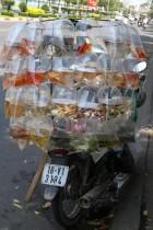 Zierfischverkauf