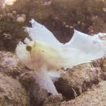 Weisser Papierfisch