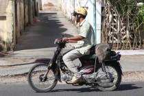 Schwein-Transporter (lebend)