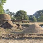 Reisproduktion