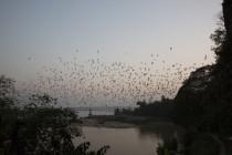 Fledermäuse auf der Jagd