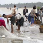 Netzpflege und Fischverkauf